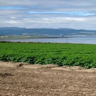 Black Isle Tatties