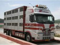 Pig transporter lorry