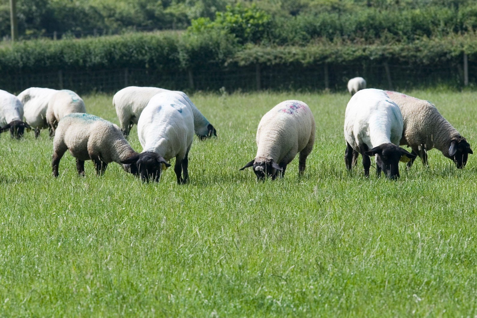 Controlling parasite diseases is vital for the health, welfare and economic sustainability of the UK sheep industry